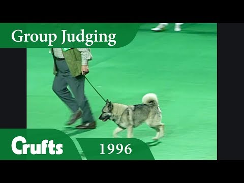 Norwegian Elkhound wins Hound Group Judging at Crufts 1996