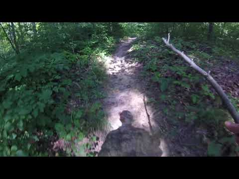 Virtual Treadmill Dog Walk - Walk in the Woods - Bird Sanctuary, Culver, Indiana