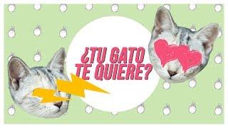 Amor de gato