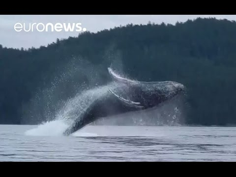 Humpback whale mother & baby stun kayakers