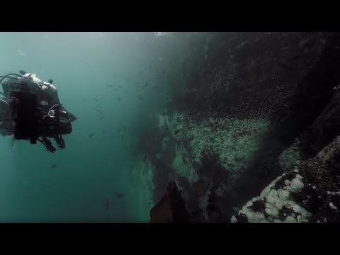 Dive With A Giant Pacific Octopus And Wolf Eel In 3D 360 | Our Blue Planet  VR | BBC Earth