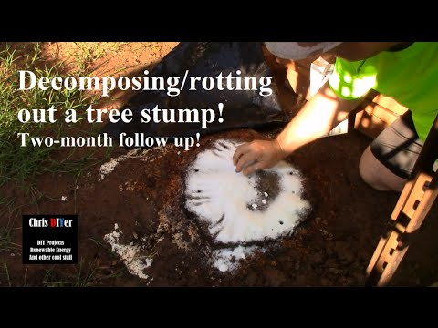 🌳 How to: Killing, Removing, rotting out tree Stumps naturally w/ Epsom Salt (Two-month follow up!)