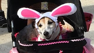 2016 Delray Easter Dog Parade