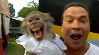 Monkey. Funny Monkeys Compilation Part 1 / Обезьяны. Смешные обезьяны 1(Monkey. Funny Monkeys Compilation Part 1 / Обезьяны. Смешные обезьяны 1 Коллекция смешных видео с забавными обезьянами. Орангу..., 2016-06-23T14:00:51.000Z)