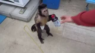 Monkey. Funny Monkeys Compilation Part 1  Обезьяны. Смешные обезьяны 1