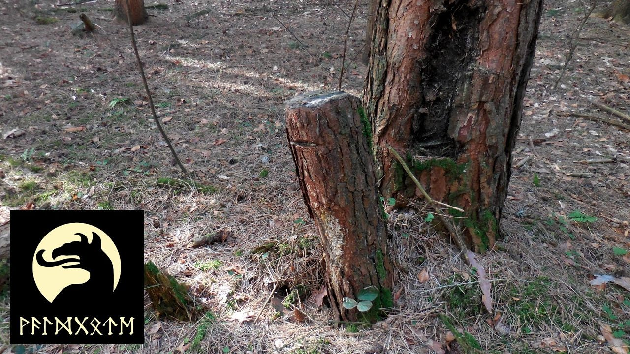 Waldgote Outdoor: Kienspan Aus Dem Wald