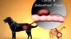 Mulligan Stew Pet Food