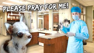 My Dog Went In For Double Surgery Today For This  | Vlog #1131