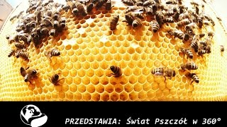 Świat Pszczół w 360° VR // The world of bees 360° VR