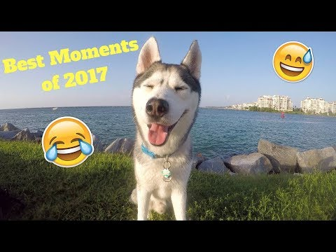 Download Youtube: Gohan's BEST Moments of 2017!
