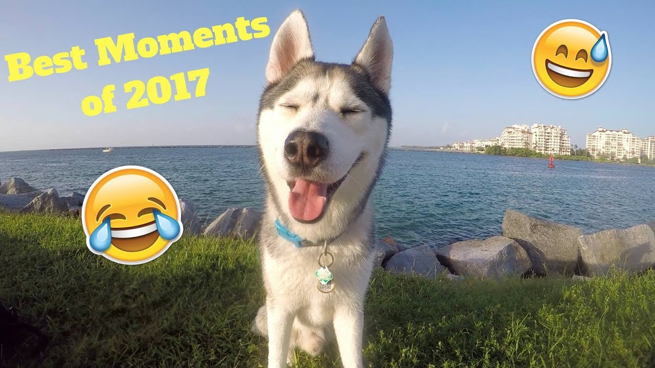 Gohan's BEST Moments of 2017!