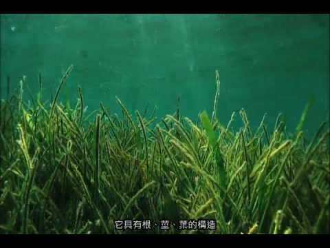 海草的生長環境