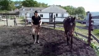 methodoogie de debourage comment debourrer un cheval en douceur