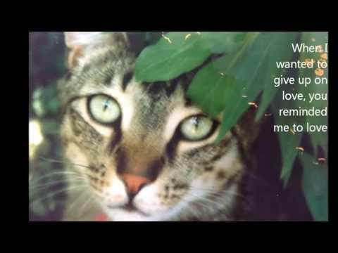 All Cats Go To Heaven Youtube