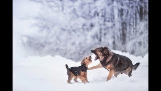 Funny dogs have fun and play in the snow. Animals and snow.