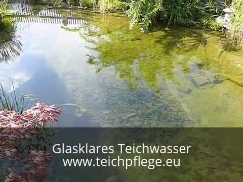Klares Wasser Im Teich Mit Dem Richtigen Teichfilter Youtube