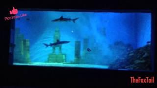 Рифовая акула - самая опасная акула в мире !!!