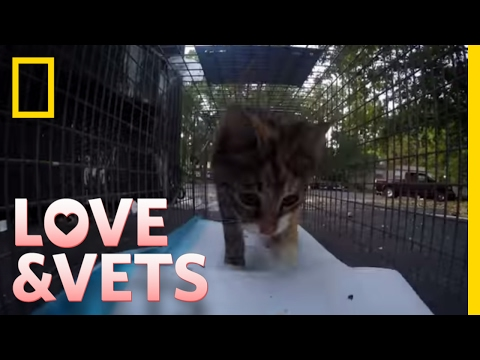 Rescuing Stray Cats | Love & Vets