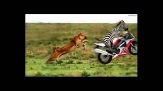 śmieszne zwierzęta