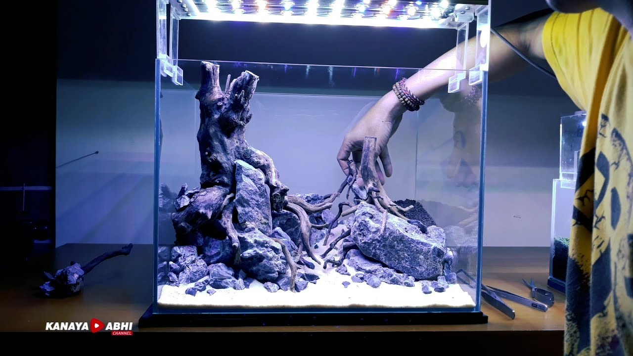Aquascape Layout Set Up Aquascape Forest Youtube