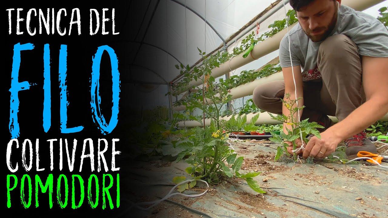 Sostegni Per Pomodori In Vaso coltivo in serra pomodori senza sostegno