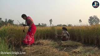 Entertainment Video || खेत मे हुआ बलात्कार || Shivani Singh & Khushi Singh, thumbnail