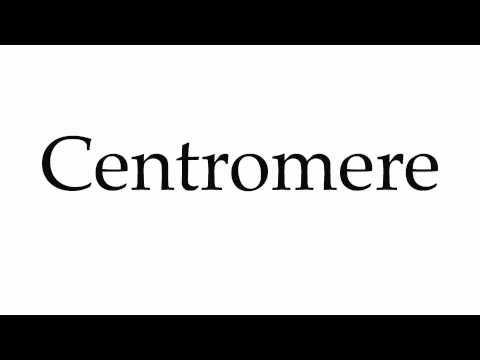 How to Pronounce Centromere