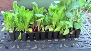 Gardening in the Fall: Early Fall Garden Tour