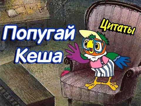 Мультфильм про кешу попугая фразы
