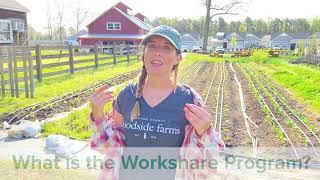 Woodside Farms | Fridays on The Farm | Volunteer Opportunities