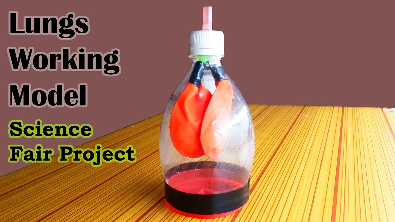 make awesome lungs working model science models and