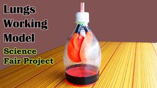Harika 7. Sınıf için Çalışma Modeli, Bilim Modelleri ve Bilim Fuarı Projeleri Akciğer
