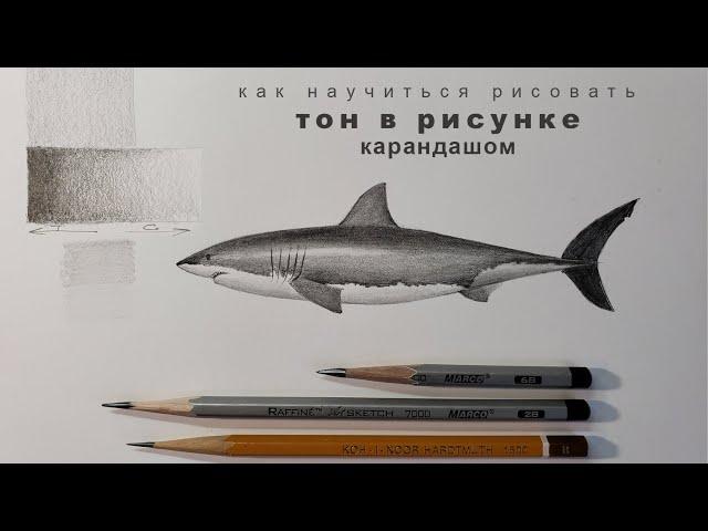 тон в рисунке линия и тон в рисунке карандашом