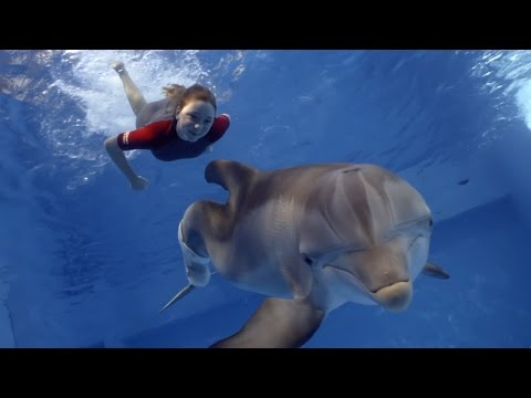 Welcome to Clearwater Marine A is listed (or ranked) 1 on the list Dolphin Tale 2 Movie Quotes