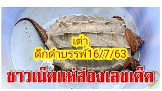 ชาวเน็ตแห่ส่อง  เลขเด็ดเต่าดึกดำบรรพ์  16/7/63