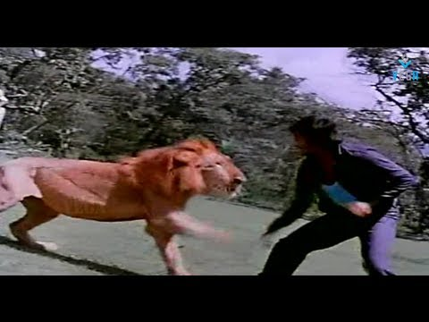 Superstar Rajinikanth Fighting With Lion : Annai Oru Aalayam