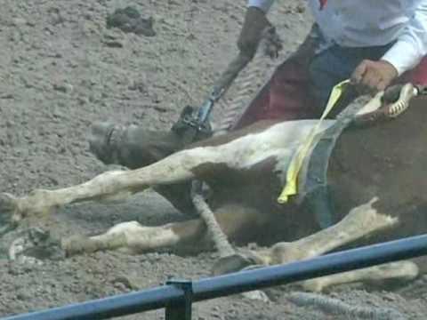 """Cheyenne Rodeo's Cruel """"Wild"""" Horse Race Exposed"""