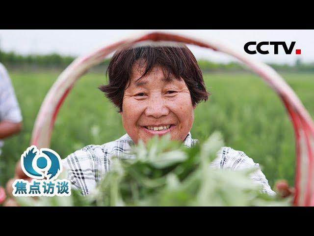 传承千年再出发!小艾草长成富民大产业 | CCTV「焦点访谈」20210614