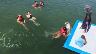 Delfines****kuba