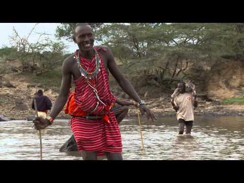 Salvando a la Vaca Maasai