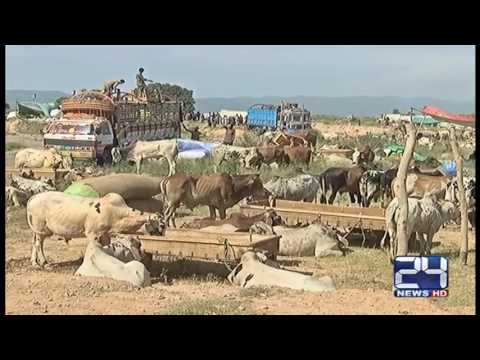 Islamabad ki sab sy bari maweshi mandi main sahuliyat ka fuqdan