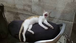Funny Cat baby sleeping on scooty | cute cat sleeping mode
