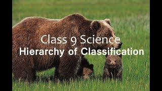 Hierarchy of Classification - Diversity in Living Organism : CBSE Class 9  IX Science