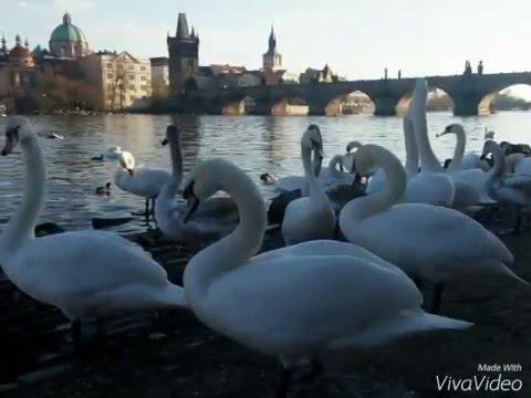 Fotos de la ciudad de Praga