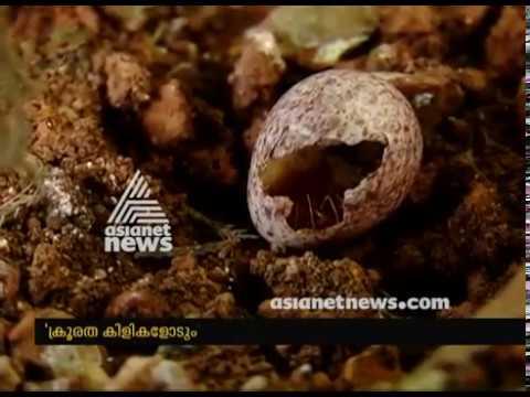 ക്രൂരത കിളികളോടും; മനഃസാക്ഷി മരവിക്കുന്ന കാഴ്ച  | Lens 4 Feb 2018