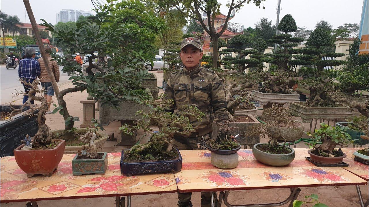SH.2407.Báo giá 3,5tr cây Si mini và dàn Bonsai với những bệ phôi Sanh hay quá.Văn Giang Hưng Yên.