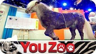 Das Pferde Orakel │YouZoo