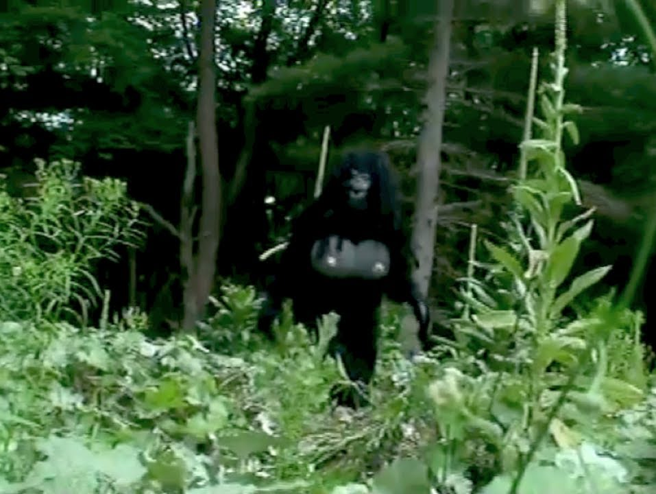 10 Real Bigfoot Sightings Caught on Tape - YouTube