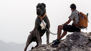 THE 10 BEST DOG BREEDS FOR HIKING