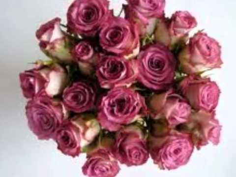 Zeven anjers, zeven rozen (Rob van Daal) Chords - …